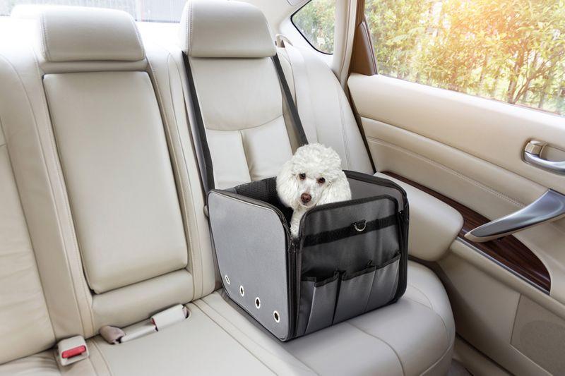 Bilsete til hund: Dette er de beste bilsetene til hunden din